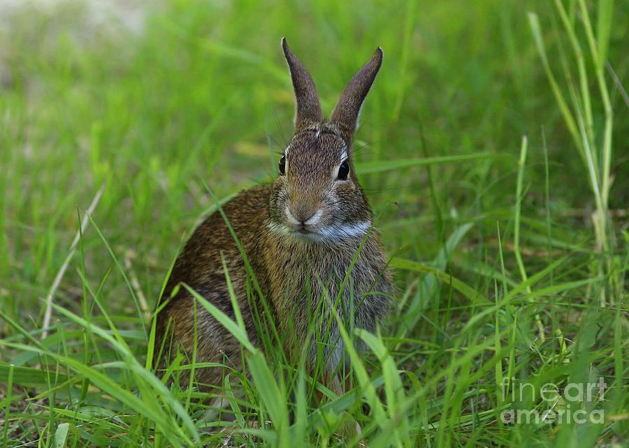 Inquisitive Rabbit Watching You Photograph - Inquisitive Rabbit Watching You by Inspired Nature Photography Fine Art Photography