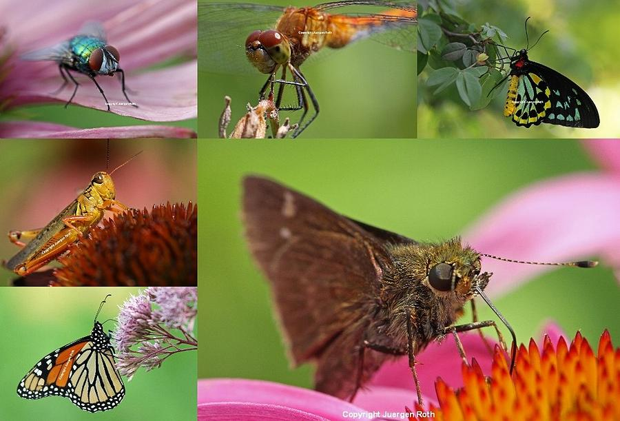 Insect Macro Photography Art Photograph