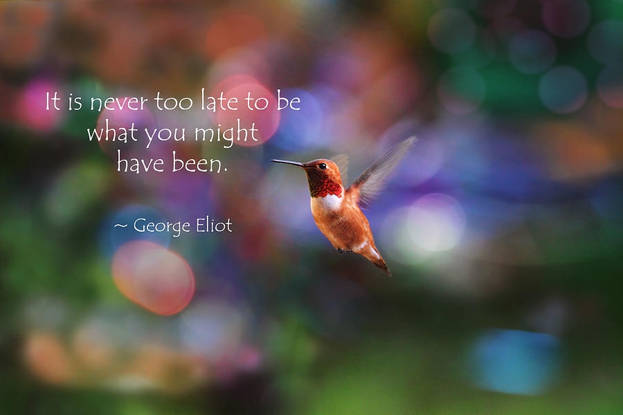inspirational hummingbird photograph by peggy collins