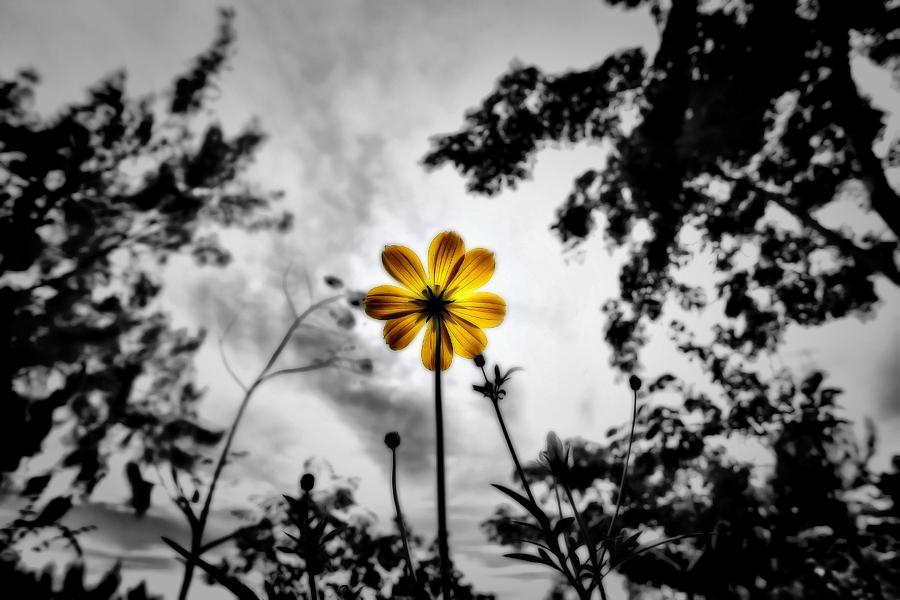Daisy Photograph - Inspire by Suradej Chuephanich