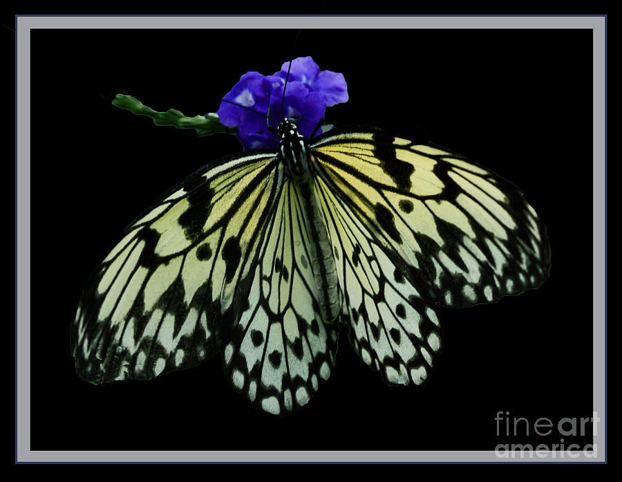 Inspired By Butterflies  Photograph  - Inspired By Butterflies  Fine Art Print