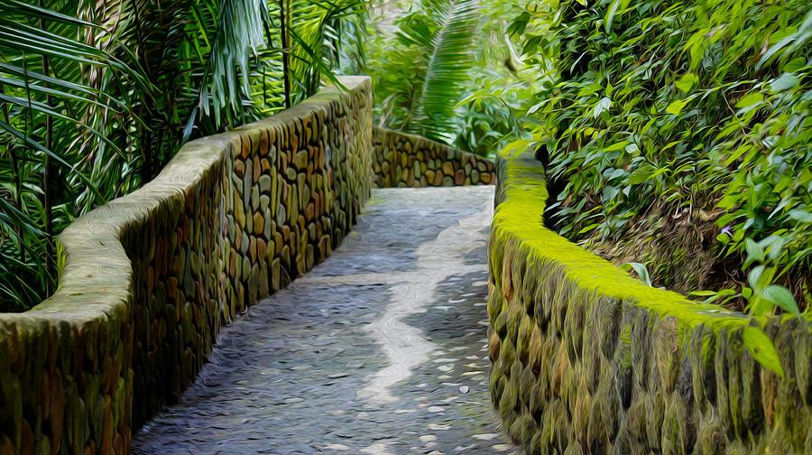 Into The Jungle Photograph
