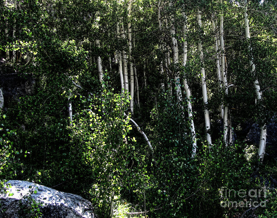 Into The Woods Digital Art  - Into The Woods Fine Art Print