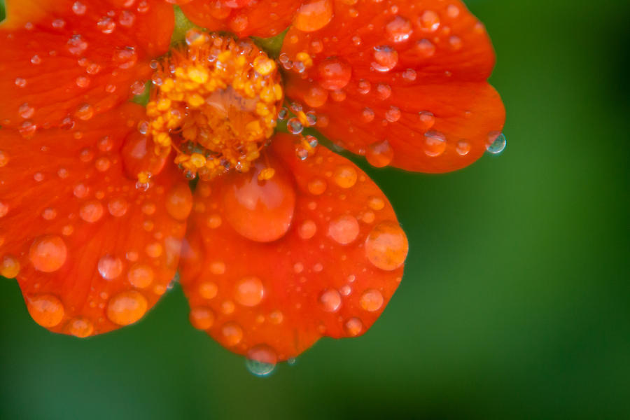 Close-up Photograph - Invigorating by Matt Dobson