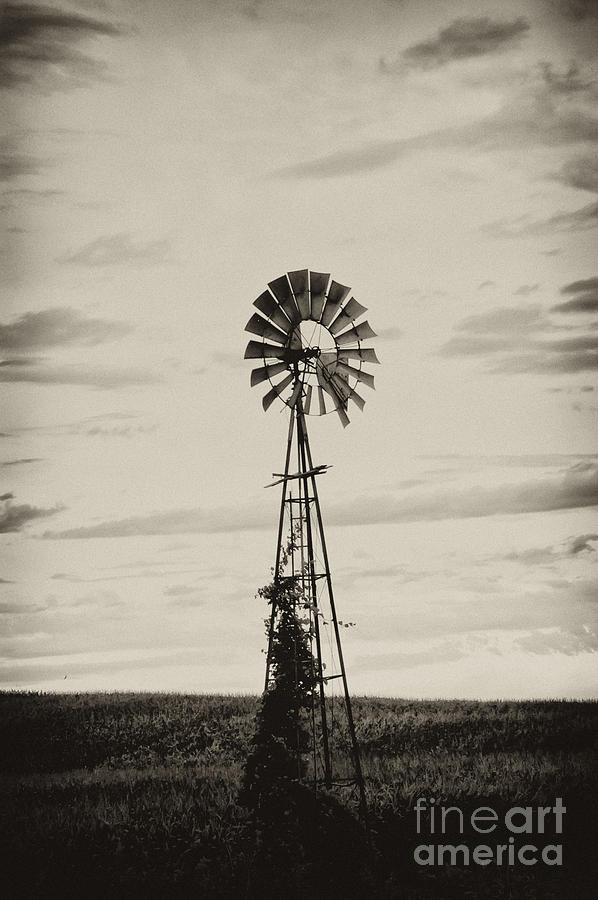 Iowa Windmill In A Corn Field Photograph