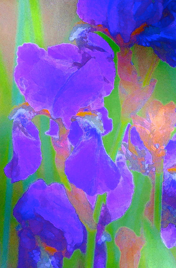 Floral Photograph - Iris 59 by Pamela Cooper