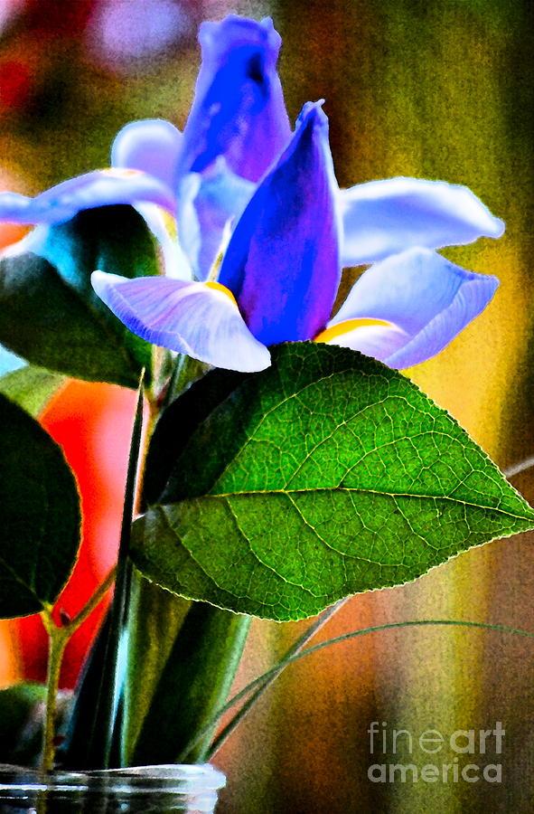 Iris Carried Away Photograph