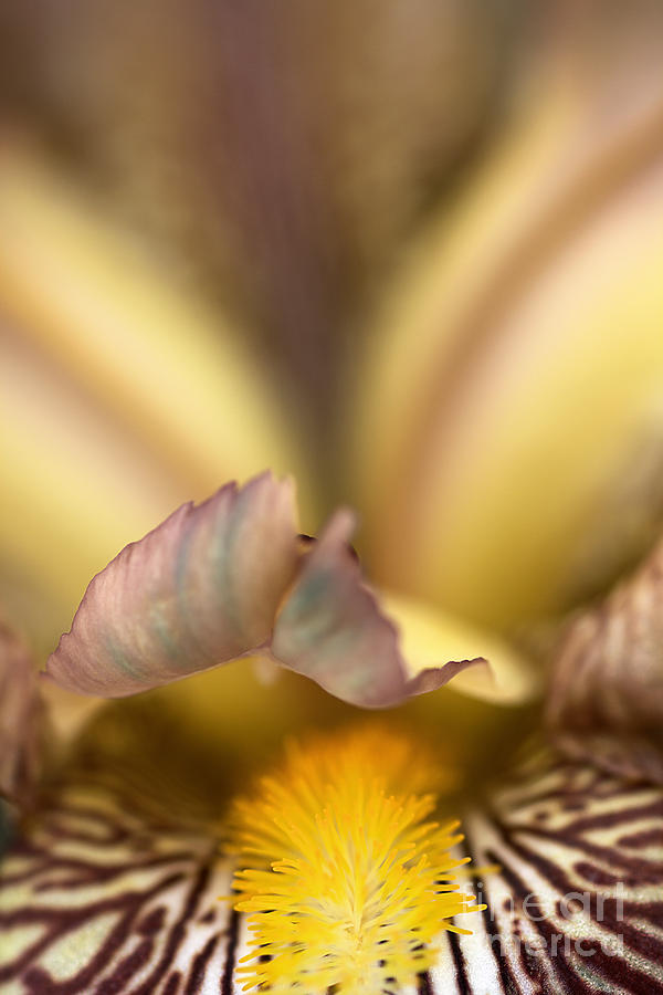 Iris Mouth Photograph  - Iris Mouth Fine Art Print