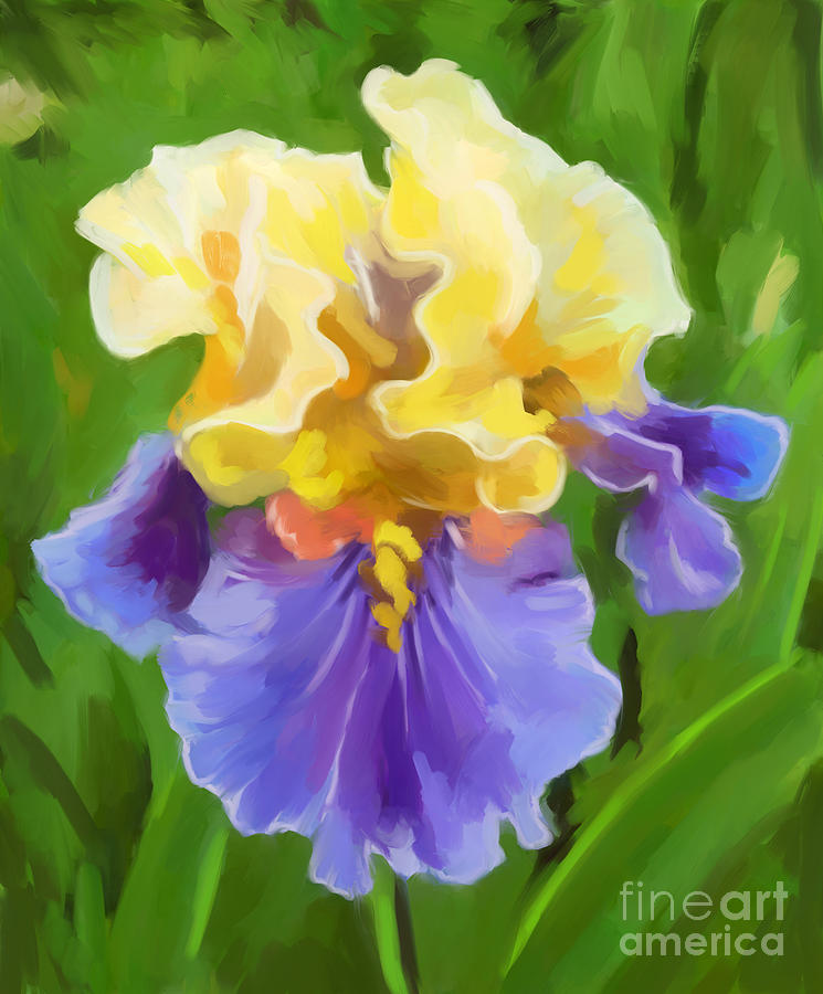 Iris yellow and purple painting by tim gilliland for Purple and yellow painting
