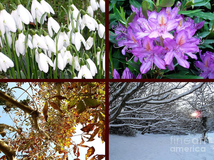 Irish Seasons Photograph  - Irish Seasons Fine Art Print