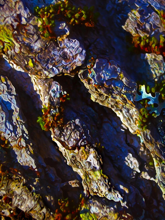 Ironwood Bark With Moss Photograph