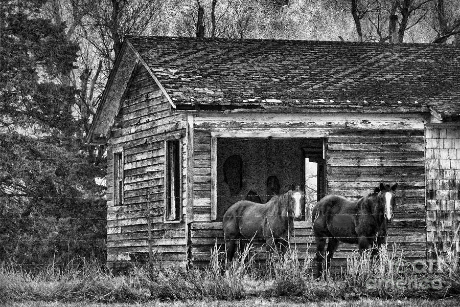 Is This Our Barn Photograph  - Is This Our Barn Fine Art Print