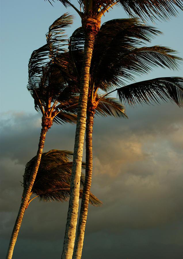 Island Breeze Photograph