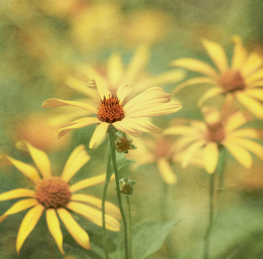 Yellow Flower Photograph - It Must Be by Kim Hojnacki