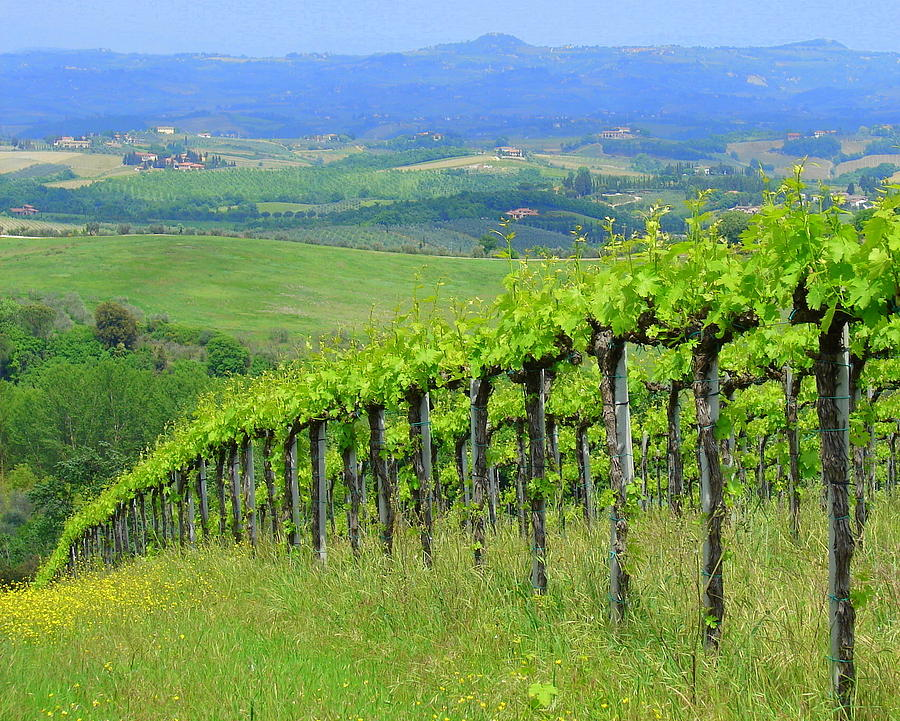 Italian Vineyard Photograph