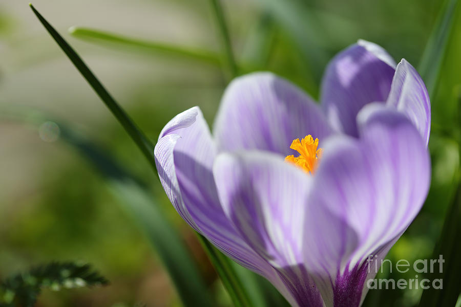 Its Finally Spring Photograph  - Its Finally Spring Fine Art Print