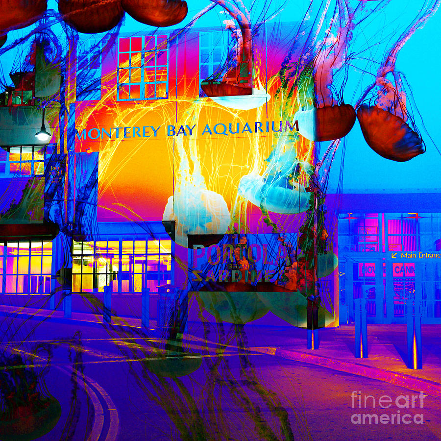 Its Raining Jelly Fish At The Monterey Bay Aquarium 5d25177 Square Photograph  - Its Raining Jelly Fish At The Monterey Bay Aquarium 5d25177 Square Fine Art Print