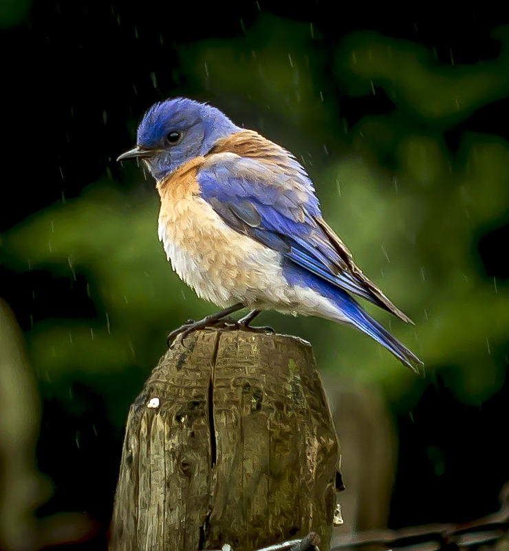 Birds Photograph - Its Wet Out Here by Jean Noren