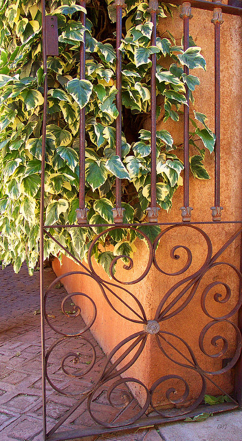 Ivy And Old Iron Gate Photograph