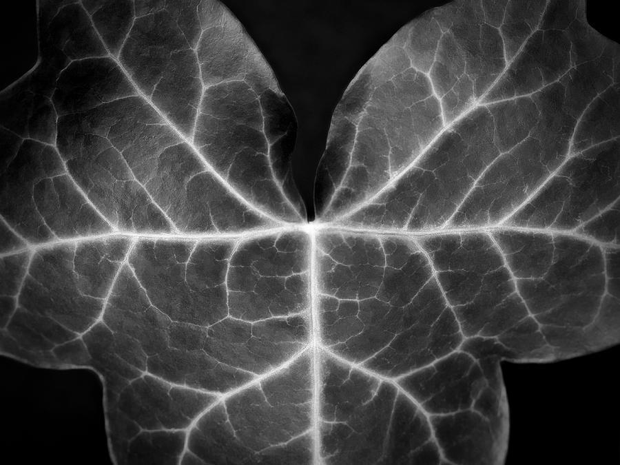 Black and white macro nature photograph artecco fine art photography
