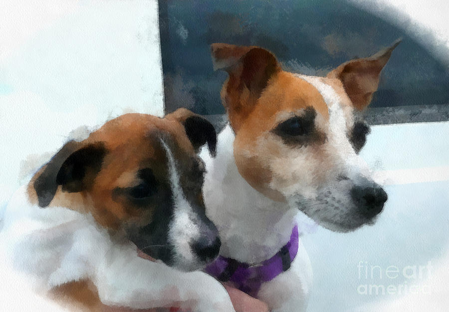 Poster Digital Art - Jack Russells by Betsy Cotton