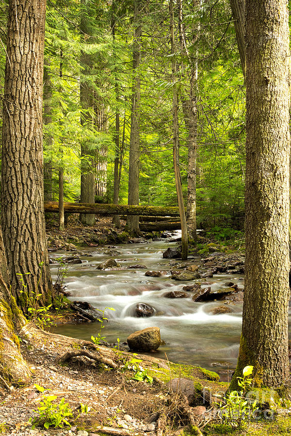 Jackson Creek - Among The Cedars Photograph