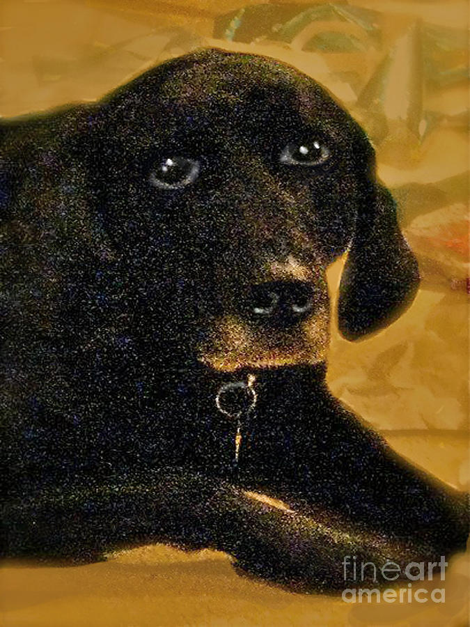 Jaime A Black Lab Digital Art