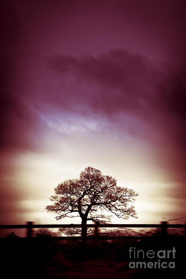 Silhouette Photograph - January Dusk by Jan Bickerton