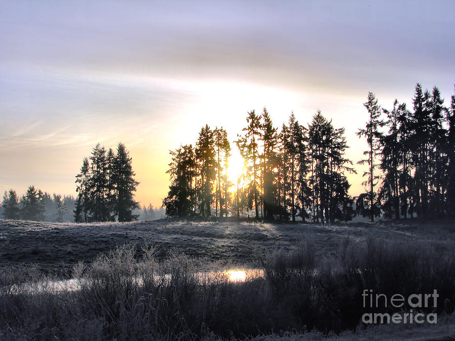 January Morning Photograph  - January Morning Fine Art Print