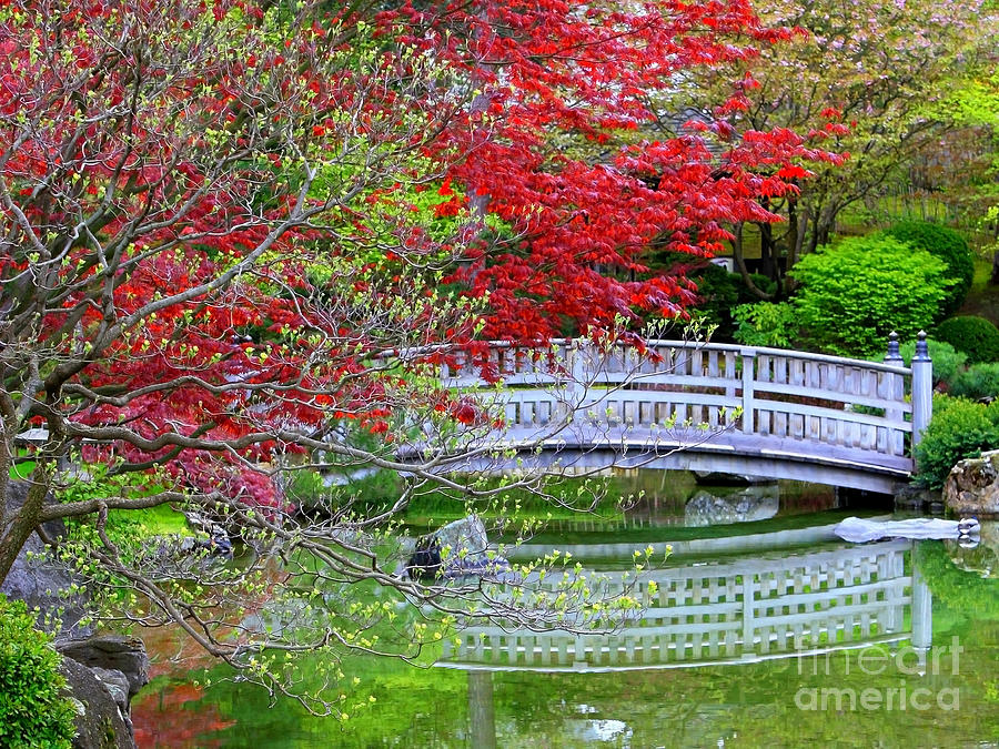 Japanese Garden Bridge In Springtime Photograph  - Japanese Garden Bridge In Springtime Fine Art Print