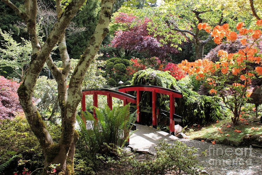 Japanese Garden Bridge With Rhododendrons Photograph  - Japanese Garden Bridge With Rhododendrons Fine Art Print