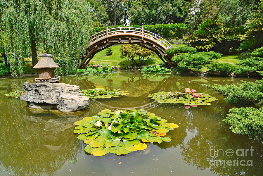 Japanese Garden With Moon Bridge And Lotus Pond With Koi
