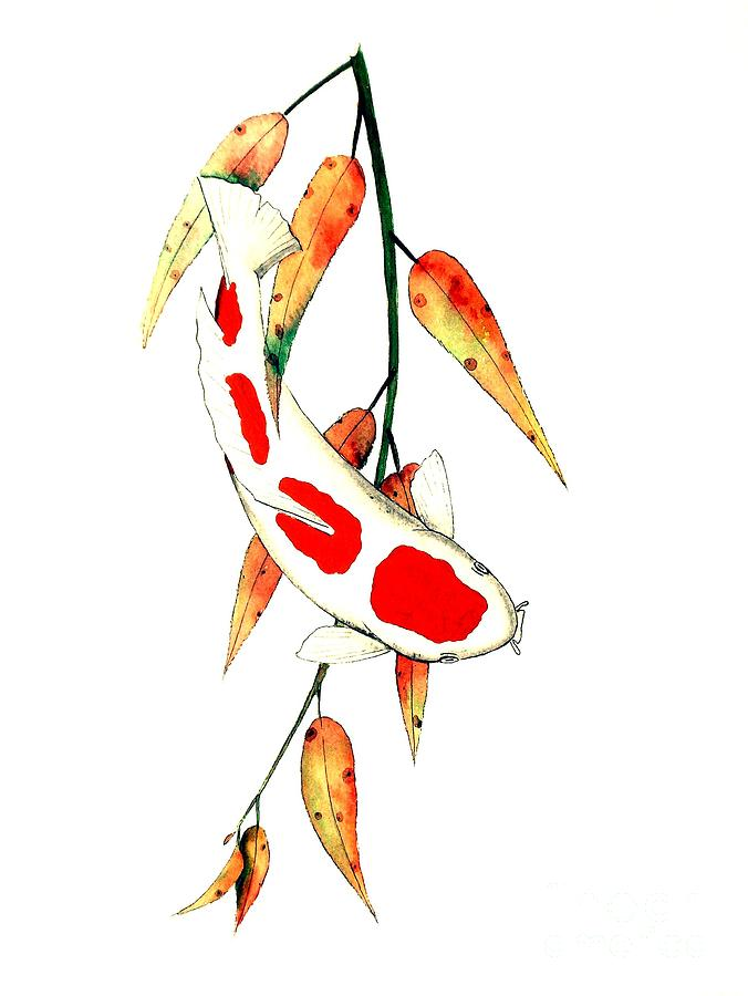 Japanese koi kohaku autumn willow painting by gordon lavender for Koi japanese art