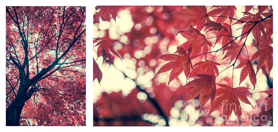 Japanese Maple Collage Photograph