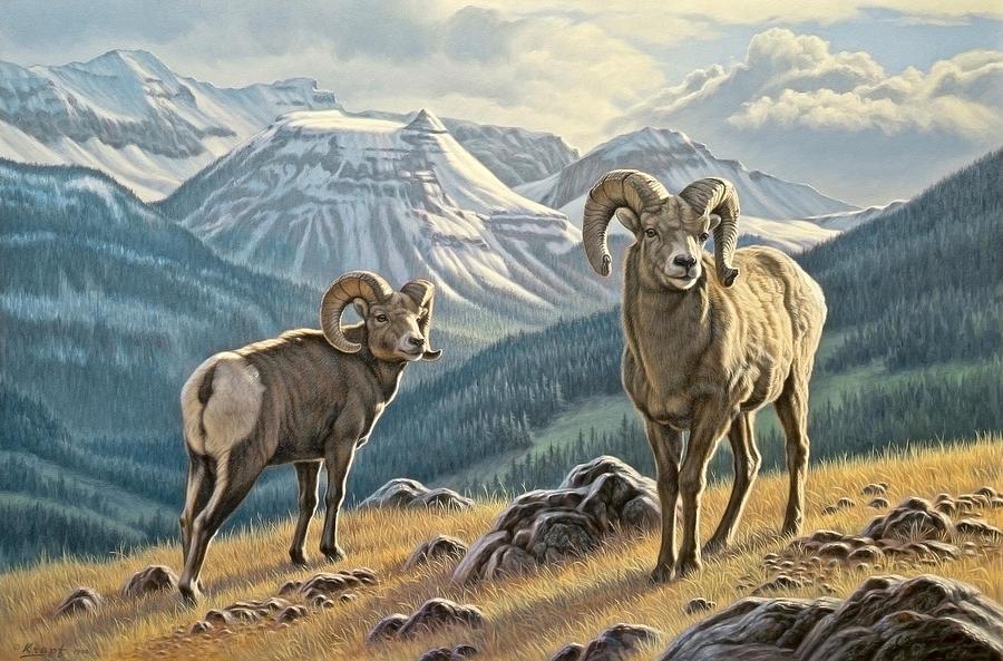 Bighorn sheep painting