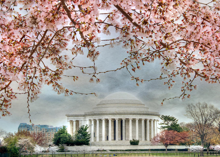 Jefferson Blossoms Photograph  - Jefferson Blossoms Fine Art Print