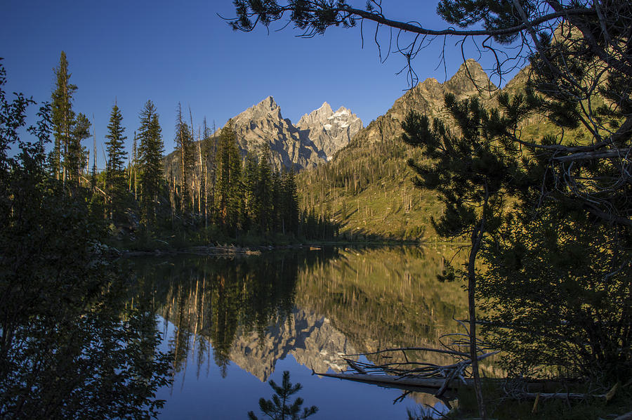 Grand Tetons National Park Photograph - Jenny Lake by Michael J Bauer