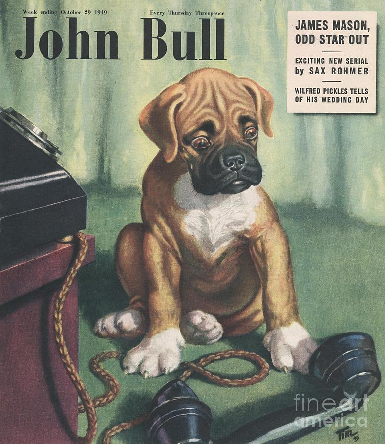 John Bull 1949 1940s Uk Dogs  Magazines Drawing  - John Bull 1949 1940s Uk Dogs  Magazines Fine Art Print