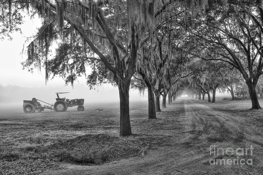 John Deer Tractor And The Avenue Of Oaks Photograph  - John Deer Tractor And The Avenue Of Oaks Fine Art Print