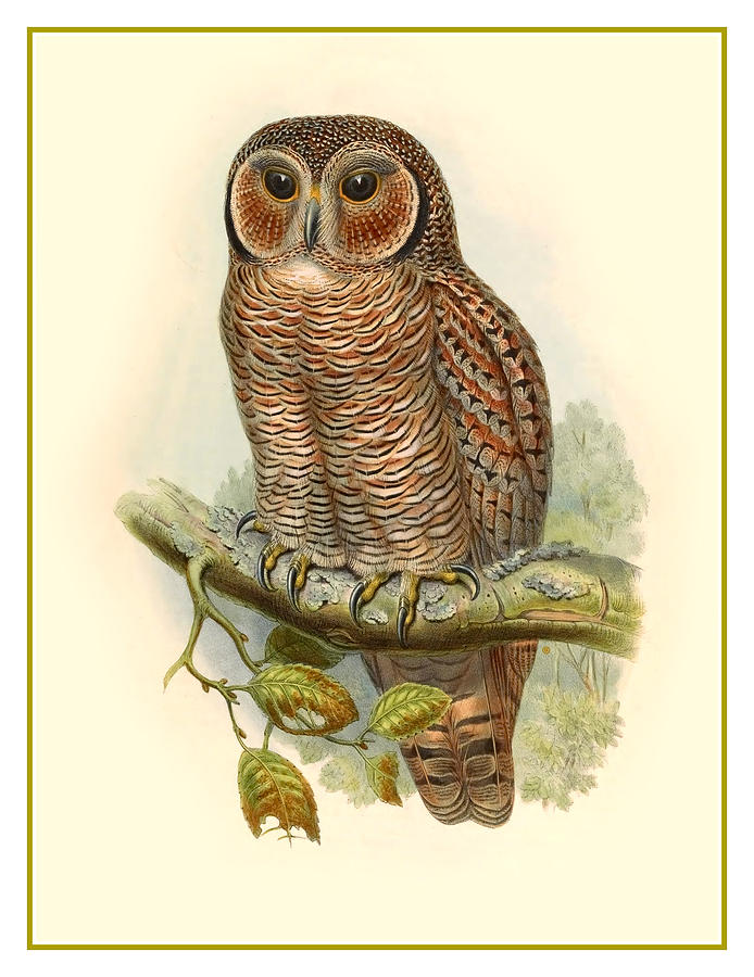 Antique Painting - John Gould Owl by Gary Grayson