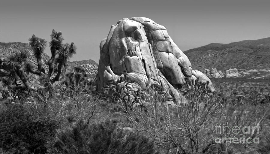 Joshua Tree - 03 Photograph