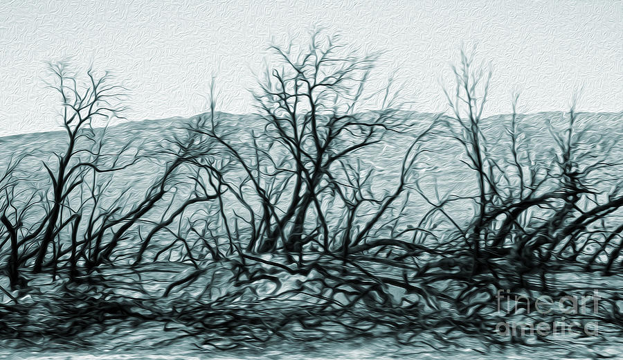 Joshua Tree - Burned Out Trees Painting  - Joshua Tree - Burned Out Trees Fine Art Print