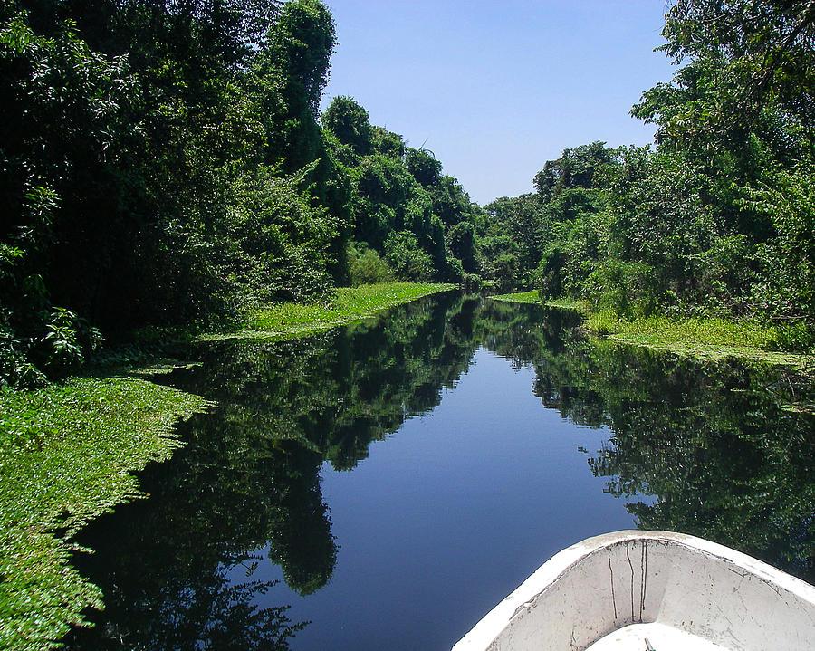 Journey Into A Green Paradise Of Mangroves Cuero Y Salado Wildlife Preserve La Ceiba Honduras Photograph