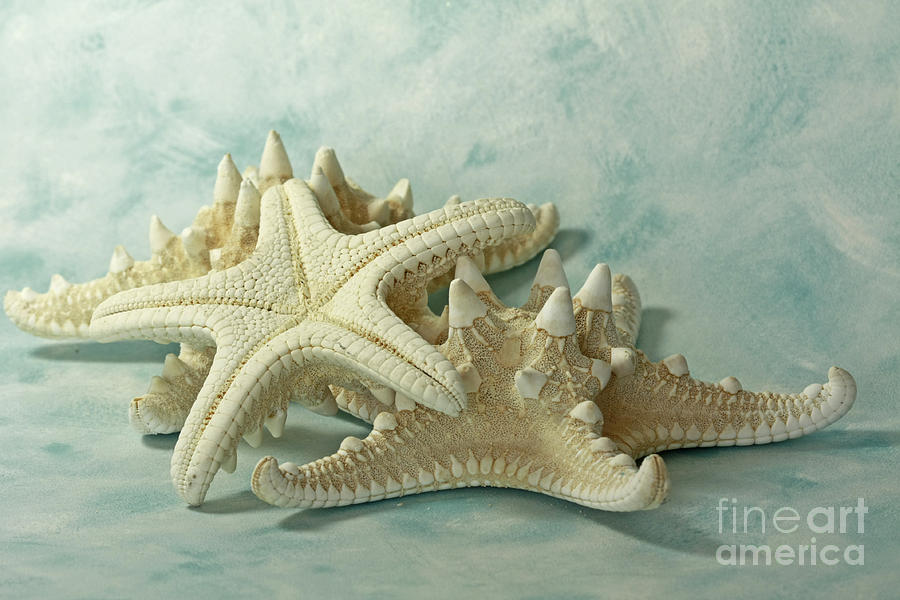 Journey To The Sea Starfish Photograph
