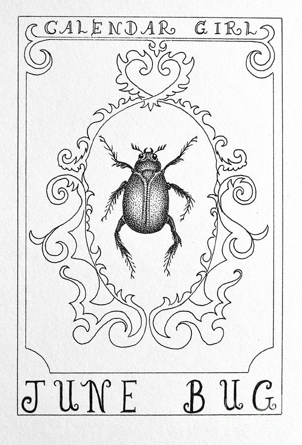 June Bug Drawing June Bug Drawing