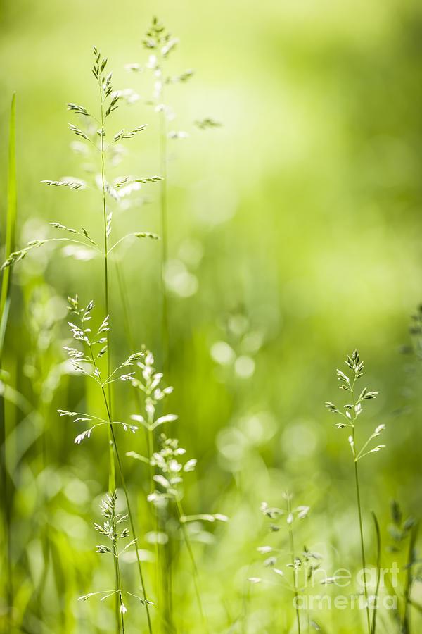 June Green Grass  Photograph