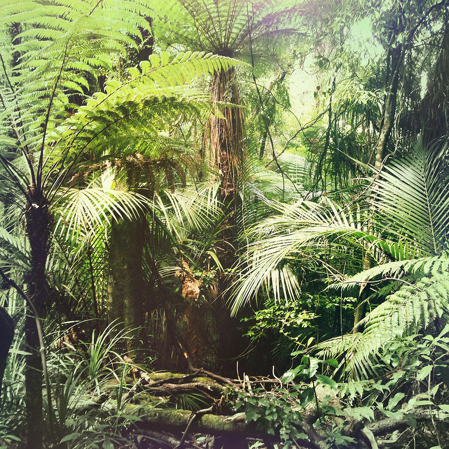 Jungle Green Photograph by Les Cunliffe
