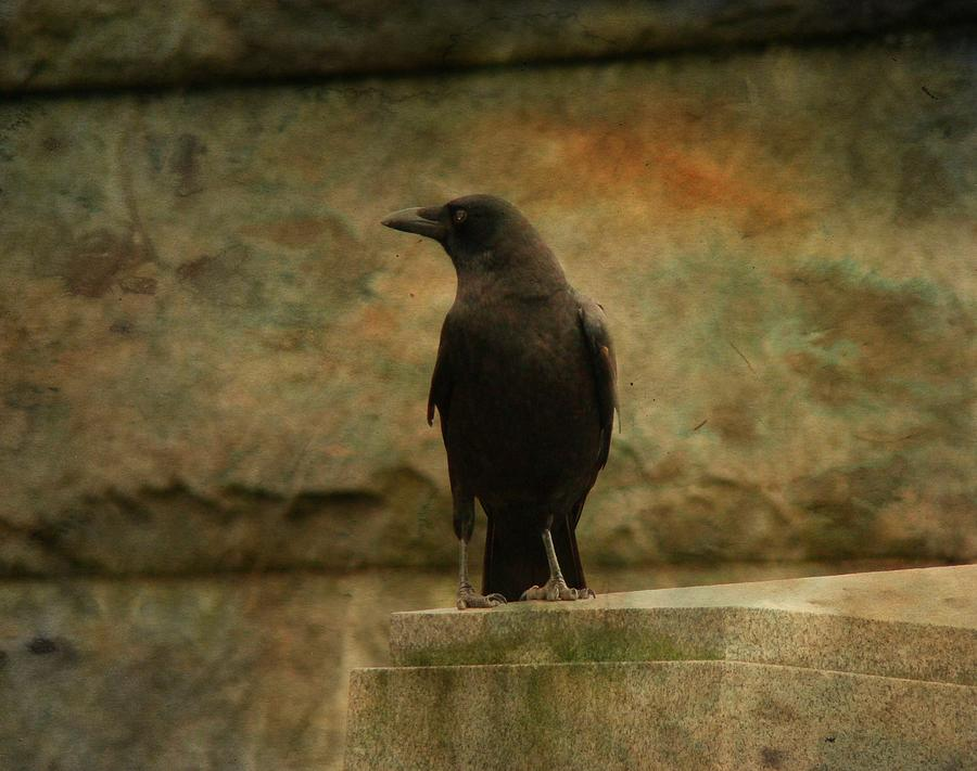 Just A Blackbird  Photograph  - Just A Blackbird  Fine Art Print