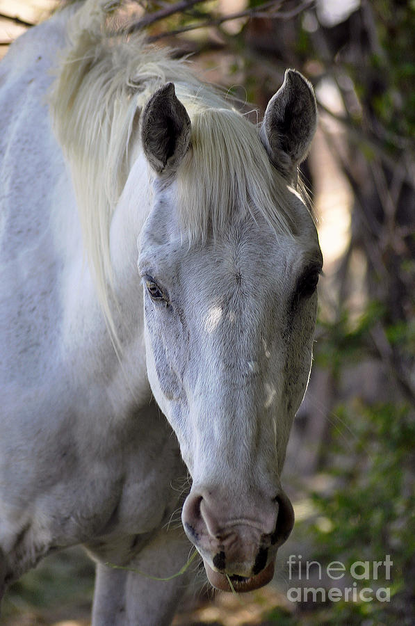 Just A Horse Photograph
