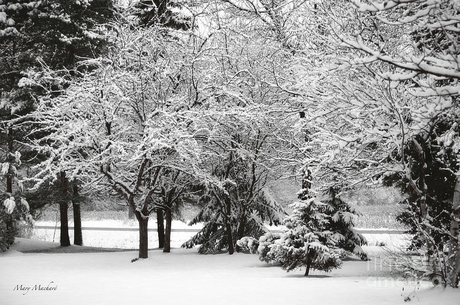 Just After A Snowfall Photograph  - Just After A Snowfall Fine Art Print